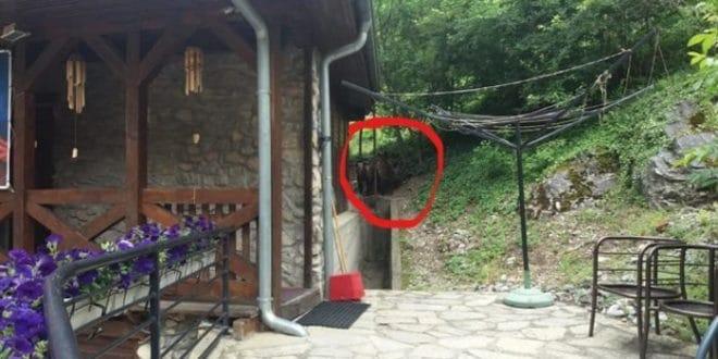 Медведи у посети Светим Архангелима код Призрена (видео) 1