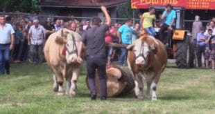Златибор: Одржан 14. Сеоски вишебој у Јабланици (видео)