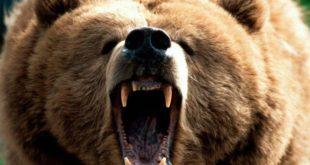 Само ви причајте са Немцима и шиптарима али кад тад ће мечка да заигра и пред вашом рупом! 8