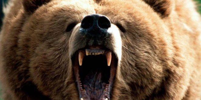 Само ви причајте са Немцима и шиптарима али кад тад ће мечка да заигра и пред вашом рупом! 1