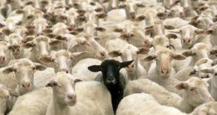 Казна због Младе(н)овца 10