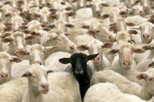 Казна због Младе(н)овца