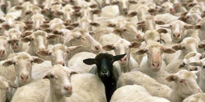 Казна због Младе(н)овца 1
