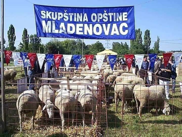 Казна због Младе(н)овца 2