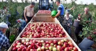 РУСИЈА САДА ИЗВОЗИ ВИШЕ ХРАНЕ НЕГО ОРУЖЈА: Пет година западних санкција — поклон за руску привреду 9