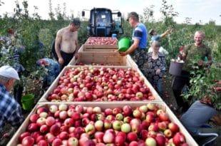 РУСИЈА САДА ИЗВОЗИ ВИШЕ ХРАНЕ НЕГО ОРУЖЈА: Пет година западних санкција — поклон за руску привреду