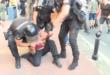"""Полиција давила младића на Геј паради, па га бацали по бетону! """"Гледај шта му раде бре""""… (видео)"""