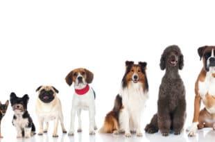 Напредњаци уводе и порез на псе