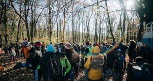 Засађено 13.000 стабала храста на Фрушкој гори