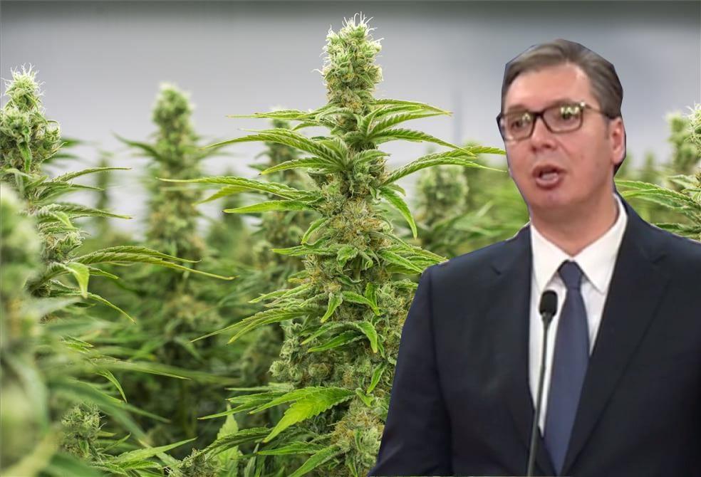 ОПЕРАЦИЈА ЈОВАЊИЦА: Како су из МУП, БИА, и ВОА штитили највећу плантажу марихуане у Европи