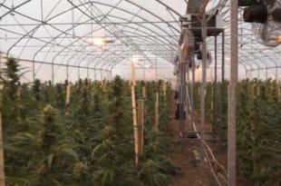 Ђилас: Много пара треба да се опреми 12 хектара како би се у контролисаним условима узгајала марихуана