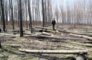 Србија изгубила 2,5 милијарде динара због илегалне сече шума уз административну линију са Kосовом