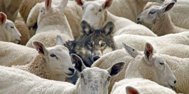 Небојша Катић: Када вукови брину о овцама