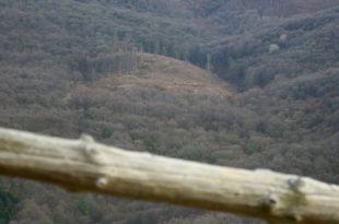 Масовна сеча шума на Фрушкој гори (видео)