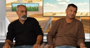 Терор миграната над сточарима у Шиду - ЗУЛУМ - пљачка - крађа - закони не важе (видео)