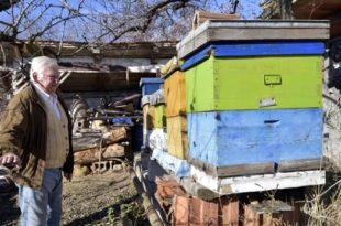 Вучићев режим не да пчеларима старијим од 65 година да обилазе кошнице, прети нестанак 40% пчела у Србији