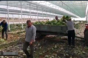 ЗБОГ ИДИОТА НА ВЛАСТИ овако завршава зелена салата на југу Србије...трактор...депонија (видео)