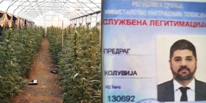 """Kолувији и његовим сарадницима са фарме марихуане """"Јовањица"""" продужен притвор"""