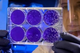 Немачка: Први резултати експеримента у Хајнсбергу: Веома је мала шанса да се вирус пренесе путем заражене површине