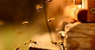 """Изгубљена сезона за пчеларе у Србији: """"Пустите нас, имамо још пар дана, иначе ће последице бити несагледиве"""""""