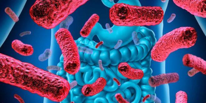 Научници открили везу између неуроваскуларне болести и бактерија у цревима