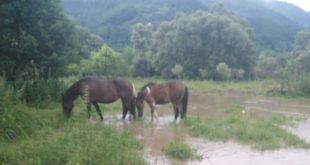 Несрећа породице Милосављевић - бујица им однела 17 КОЊА