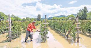Десетковани малињаци у западној Србији