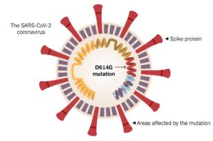 Коронавирус из Вухана није исти вирус који сада хара светом, ово је мутирани облик Д614Г који се бележи у 97% узорака
