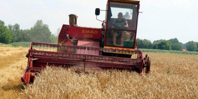 Жетва пшенице ће каснити, почеће око 10. јула