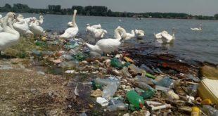 Београд: Приобаље Дунава засуто гомилом ђубрета које нико не уклања: Угрожене птице, лабудови пливају по смећу