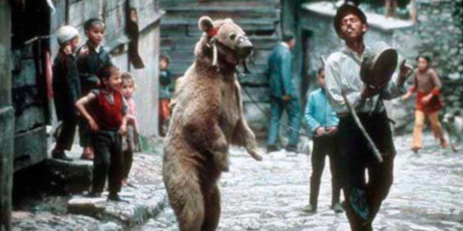 Не брини ништа ПСИХОПАТО, заигрће мечка од синоћ и пред твојом кућом!
