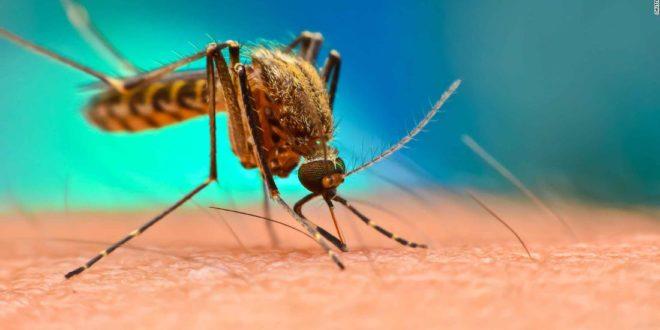 ОПАСАН ЕКСПЕРИМЕНТ: У природу пуштају 750 милиона генетски модификованих комараца