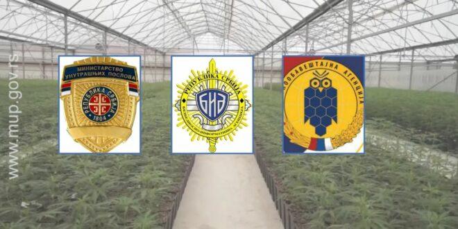 """Колувијин """"Савет за безбедност"""" - Како су из МУП-а, БИА-е и ВОА-е штитили плантажу у """"Јовањици"""""""