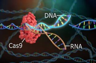 Сецкање и уништавање гена: Представљена нова научна техника