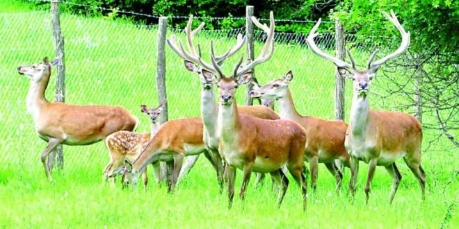 Држава газдовање над 14 ловишта препустила приватним фирмама, међу њима и фирма кажњена за криволов и партнери Веселиновића и Радоичића