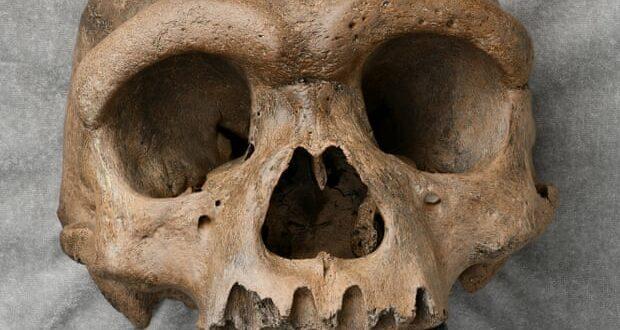 """""""Човек змај"""" мења причу о људској еволуцији: Пронађена нова ГИГАНТСКА људска врста!"""