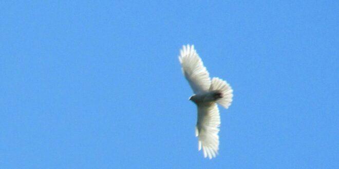 НЕСТВАРНО – птица анђеоских крила код Шида