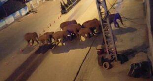 Крдо дивљих слонова руши све пред собом: Кинески град бране стотине људи и дронови (видео, фото)