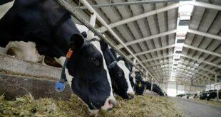 Сточари у Србији продају краве због ниске откупне цене млека