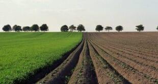 Продали игрицу за милијарду долара и купили више од 4.000 хектара пољопривредног земљишта у Банату