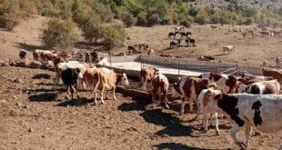 Стара планина: Стиже вода за жедне краве и коње