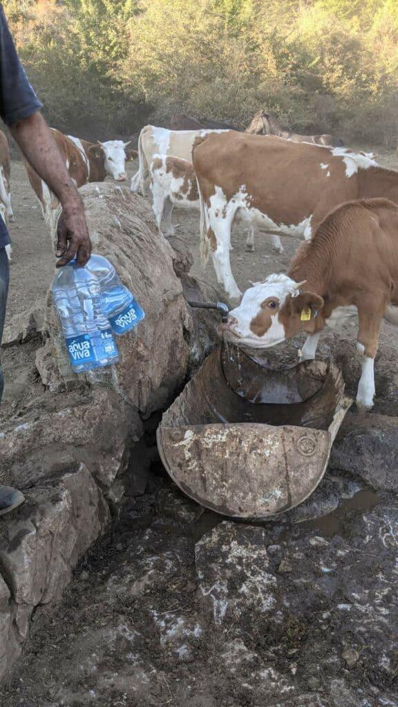 КАПА ДОЛЕ! Лесковчанин сам однео 500 литара воде за жедне животиње
