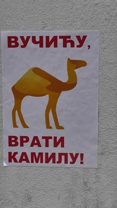 Вучићу, врати камилу!